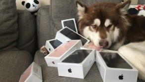 filho-de-bilionario-chines-oferece-oito-iphone-7-ao-cao-bukudodia